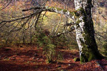 Salir al monte en otoño
